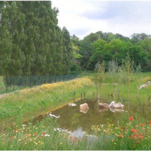 Végétalisation bassins et noues