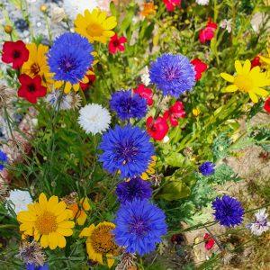 Fleurs champêtres