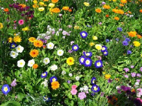 mélange 100%fleurs