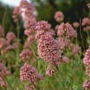 Fleurissement terrains acides