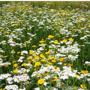 Fleurissement zones ombragées