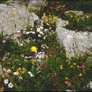 Fleurissement zone rocailleuse