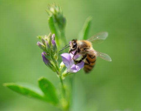 mélange fleuri biodiversité
