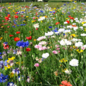 Mélange fleuri multicolore